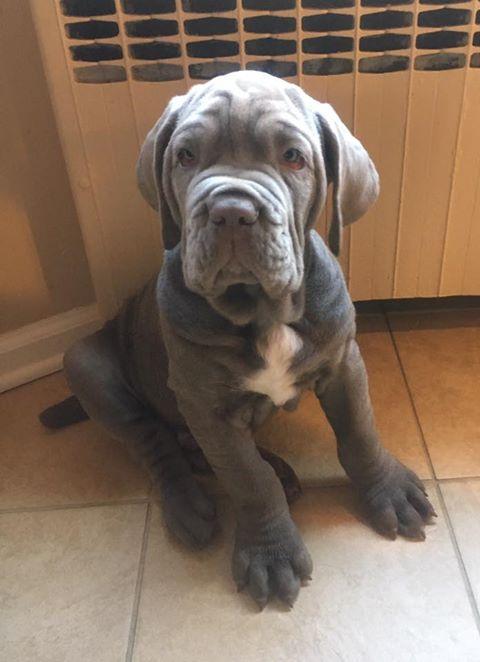 #puppytraining, #localpuppytraining,#bestpuppytraininmelbourne